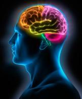 cerebro_maturidade