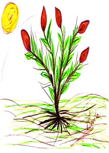 Desenho_Projeto_Acolhimento